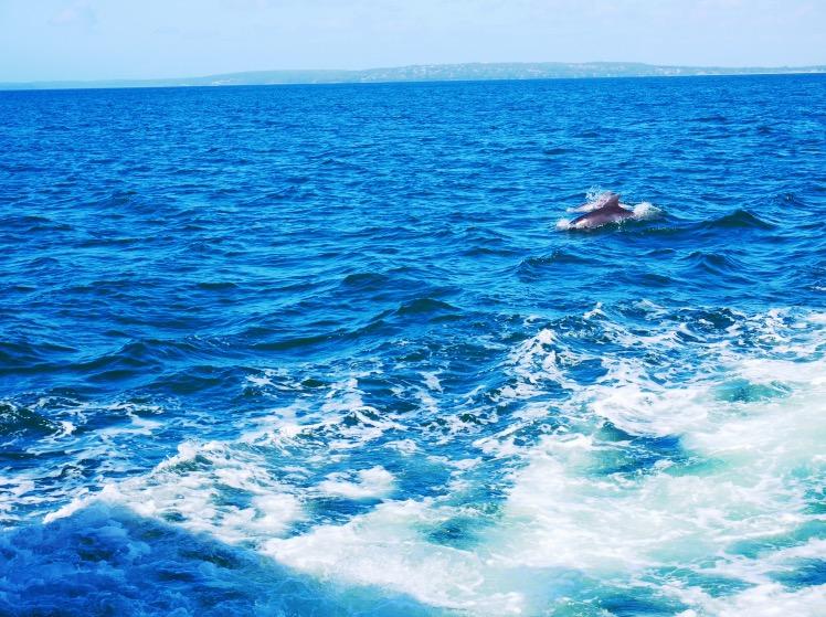 Jervis Bay | Australia