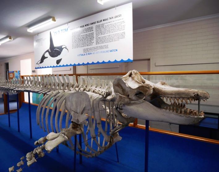 Killer Whale Museum | Eden