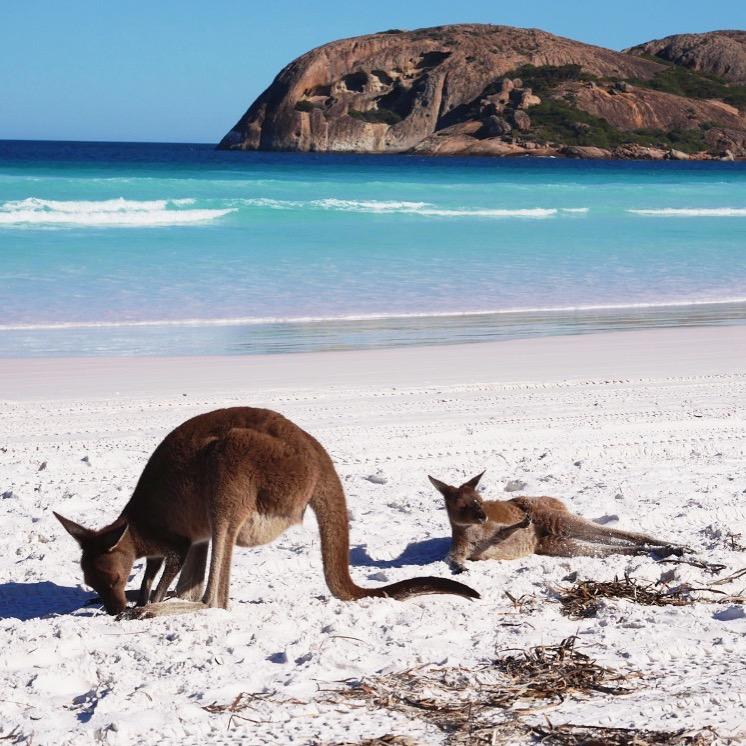 Elvis et Priestley | Kangourous | Lucky Bay | Esperance