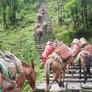Trek Nepal | Nepal
