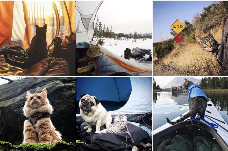 Camping avec son chat | vacances