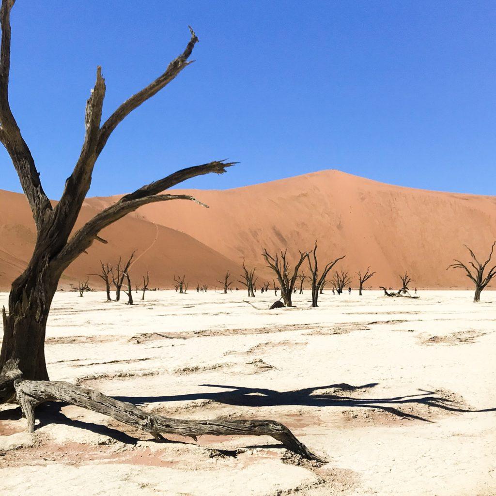 Road Trip | Namibie | Afrique