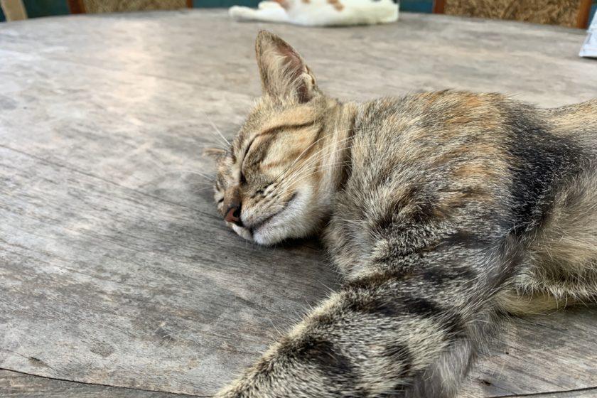 Villa Kitty | Bali | Fondation
